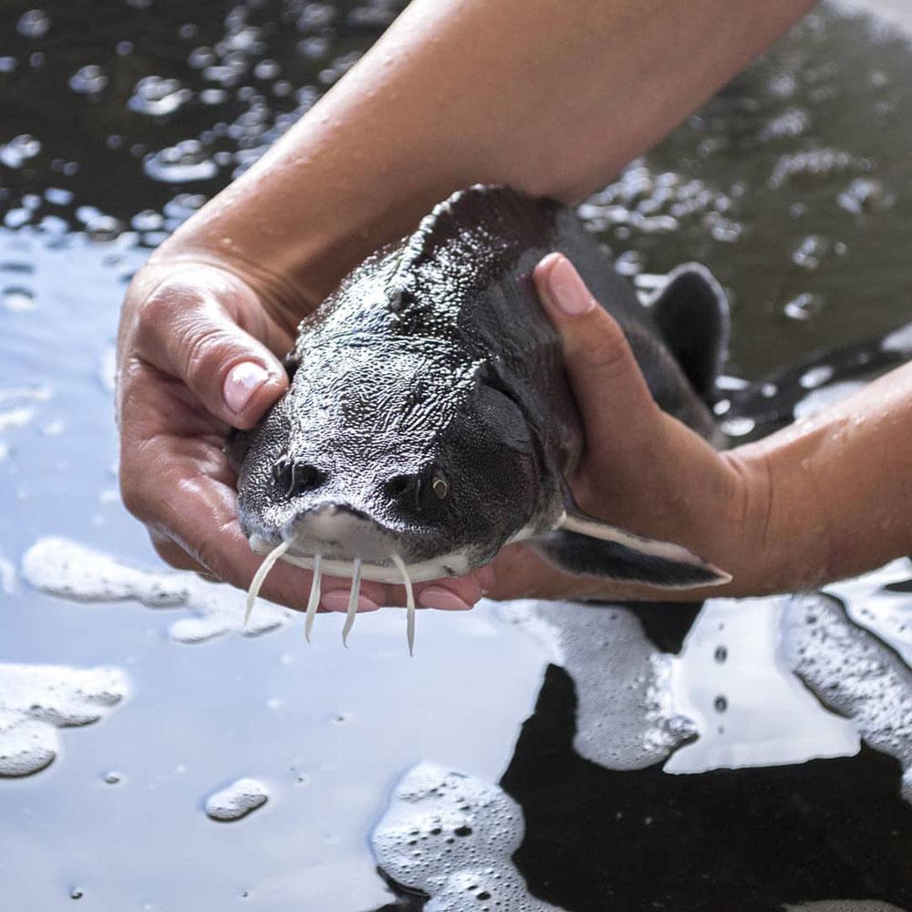 Об аквакультуре